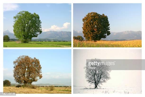 Four seasons 1