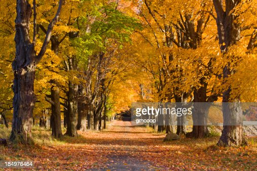 Four Seasons Tree Alley - Fall