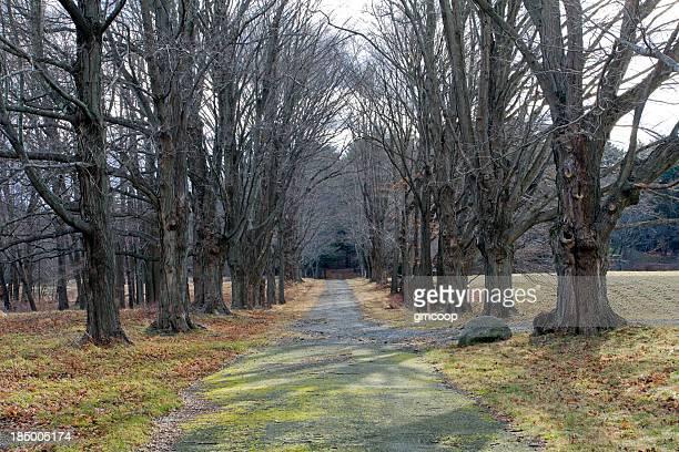 Quatre saisons-printemps, arbre Alley