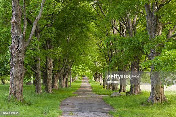 Four Seasons, Tree Alley-été
