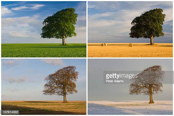 Four Seasons Tree Montage