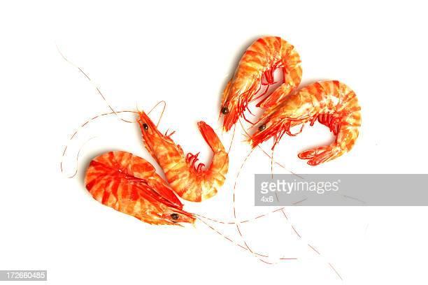Quatre des crevettes