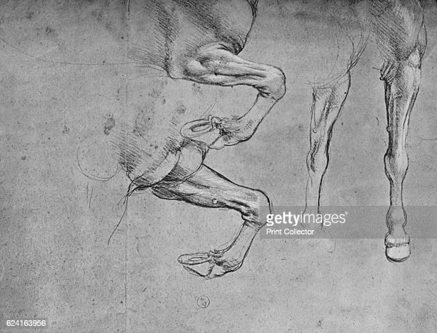 Four Studies of Horses' Legs' c1480 From The Drawings of Leonardo da Vinci [Reynal Hitchcock New York 1945] Artist Leonardo da Vinci