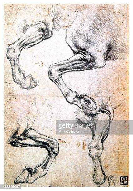 'Four studies of horses' legs' c1500 From the collection of the Museum of Fine Arts Budapest Hungary