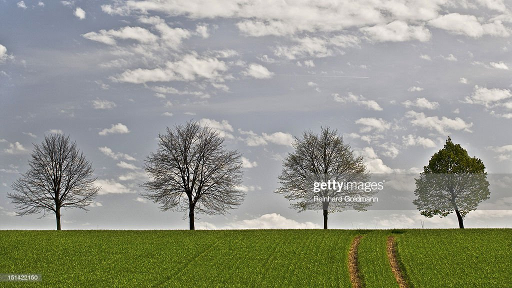 Four trees : Stock Photo