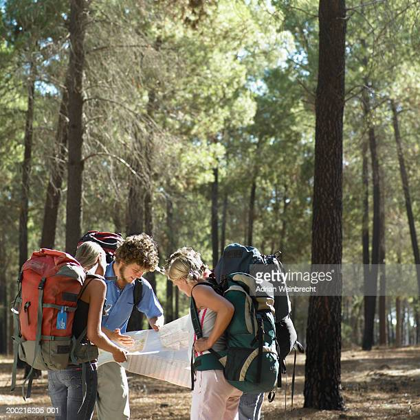 Four young male and female backpackers looking at map in woods