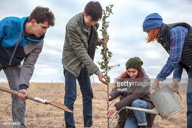 Vier junge Männer Pflanzen eines Baumes