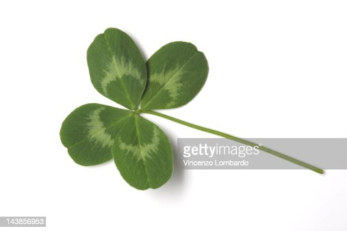 Four-leaf clover, a sign of luck