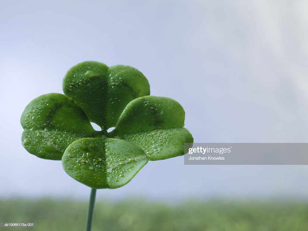 Four-leaf clover on field, close up : Stock Photo