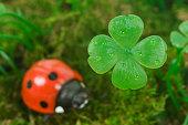 Four-leaf clover with ladybug