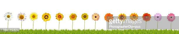 Fourteen daisies on grass XXXL+