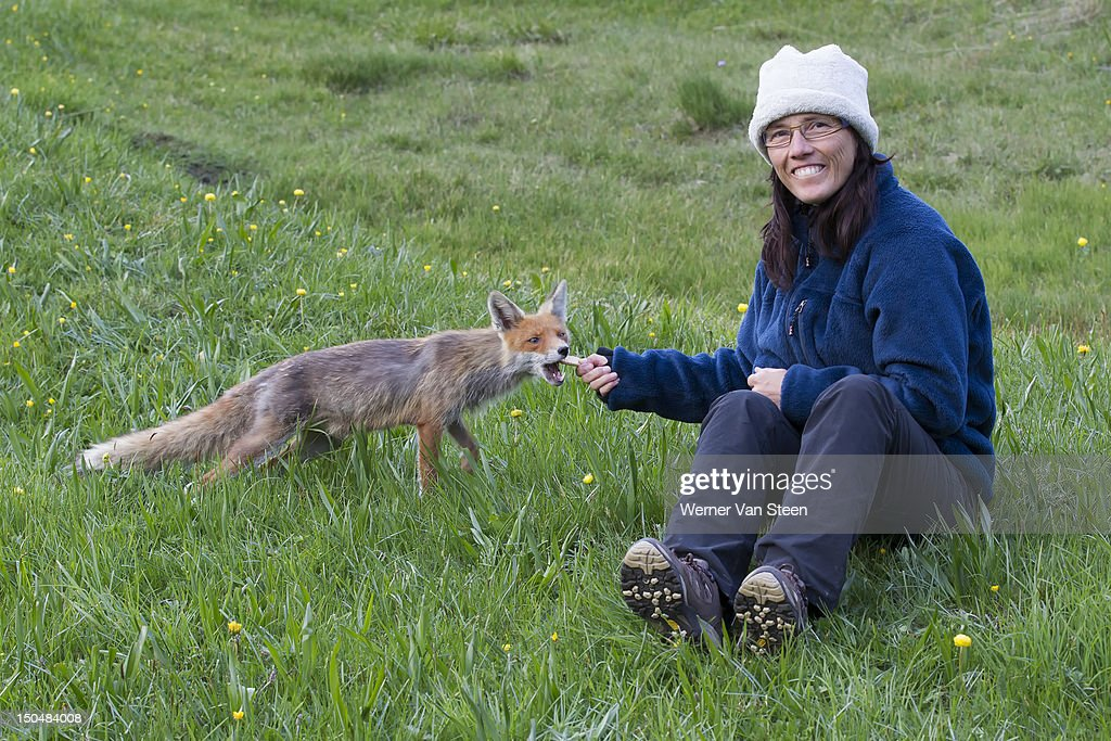 Fox and woman : Stock Photo