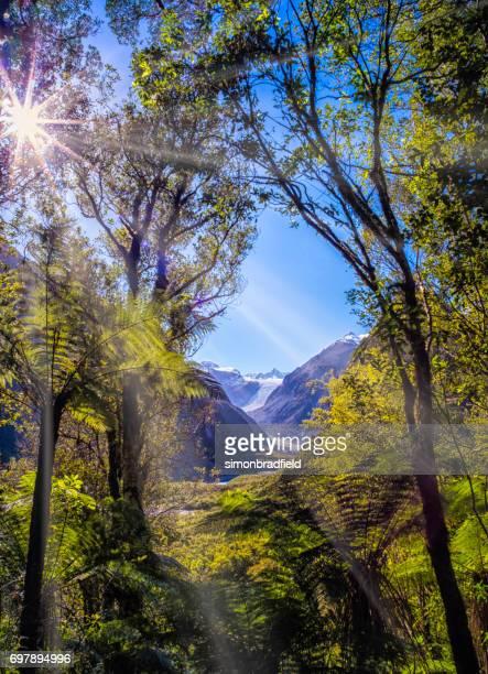 Fox Glacier On New Zealand's South Island