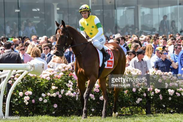 Fox Hall ridden by Luke Currie heads to the barrier before the TCL TV Stakes at Flemington Racecourse on November 09 2017 in Flemington Australia
