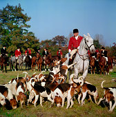Fox hunter and hounds
