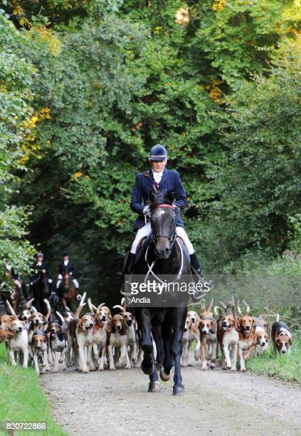 Foxhunting in the Eawy forest in Normandy riders with hunting horns followed by a pack of hounds