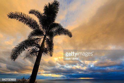 Foxtail palm and sunset in South Kona