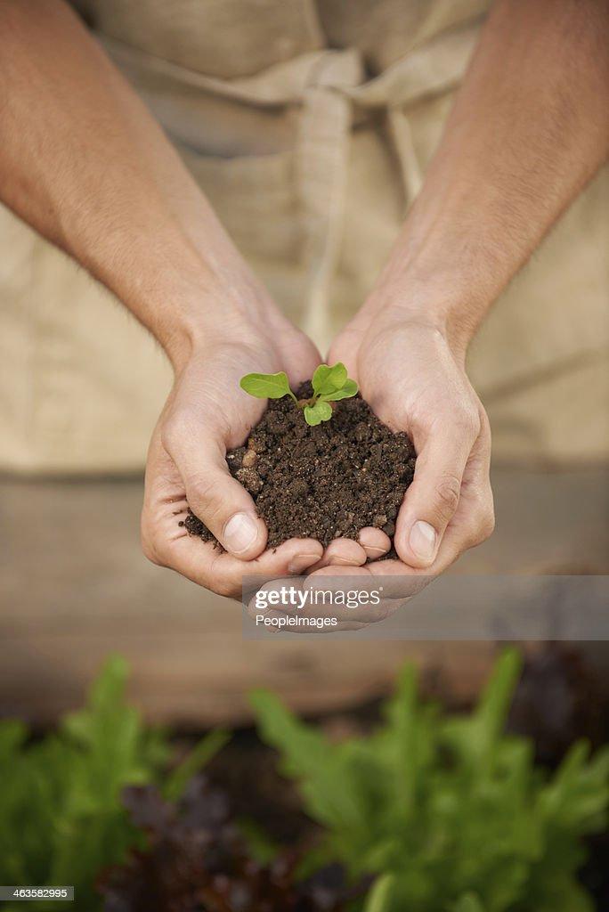 Fragile seedling