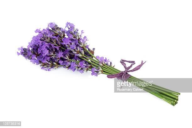 Fragrant lavender flower tied in bunch.