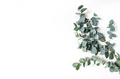 Frame, corner made of green Eucalyptus leaves and branches on white background. Floral composition. Feminine styled stock flat lay image, top view, copy space.