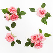 Frame made of pink roses, green leaves, branches, floral pattern on white background. Flat lay