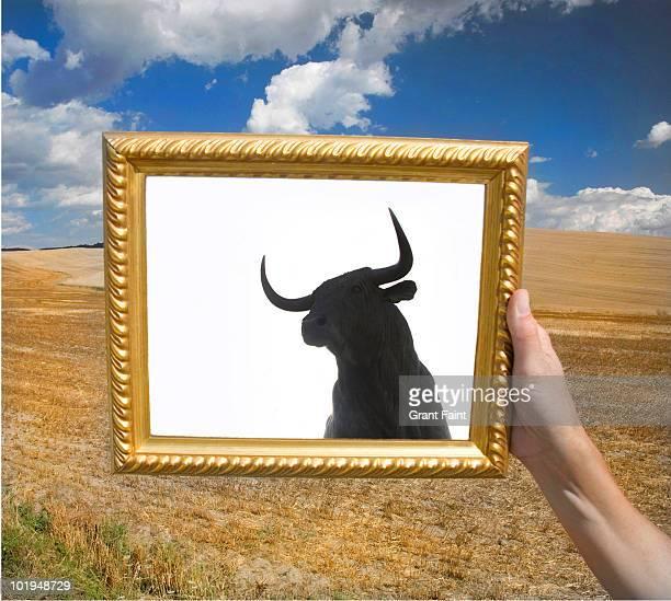 Framed photograph of bull image.