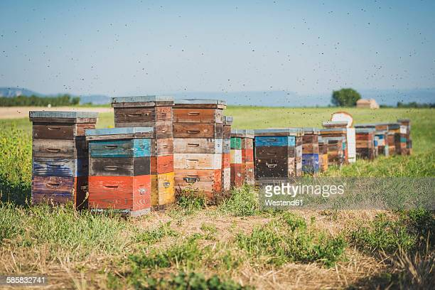 France, Alpes-de-Haute-Provence, beehives on field