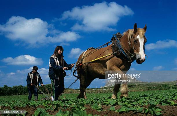 France, Brittany, farmer weeding potato field with horse led by girl