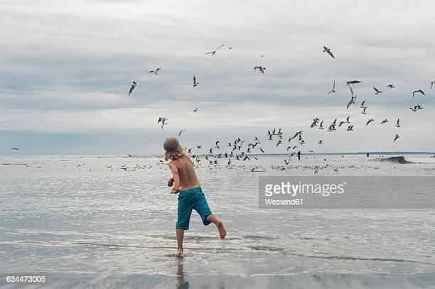 France, Brittany, Finistere, Pointe de la Torche, boy on the beach chasing seagulls
