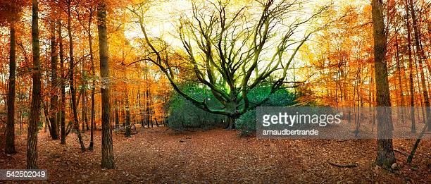 France, Brittany, Paimpont, Rennes, Bare tree in forest
