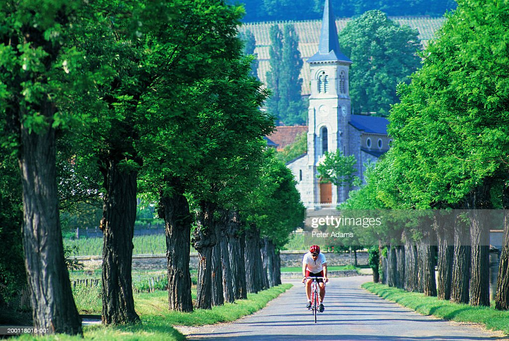 France, Burgundy, Aloxe-Corton, man cycling along tree-lined road : Stock Photo