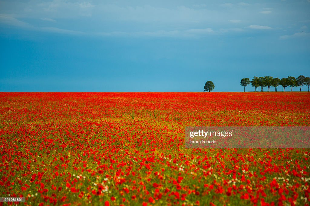 France, Fields of poppies