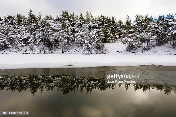 France, French Riviera, Hinterland, Thorenc lake, Snow covered trees reflection in frozen lake