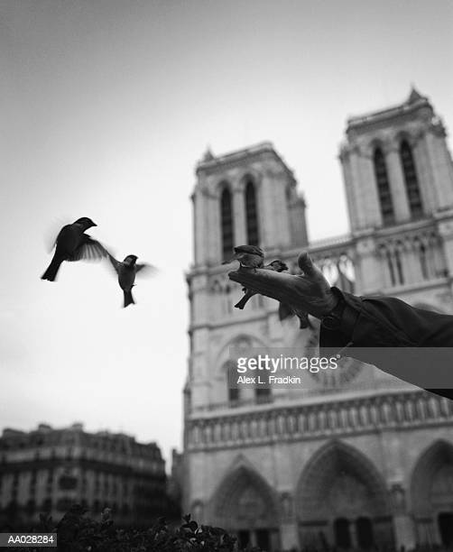 France, Ile-de-France, Paris, man feeding birds (blurred motion, B&W)