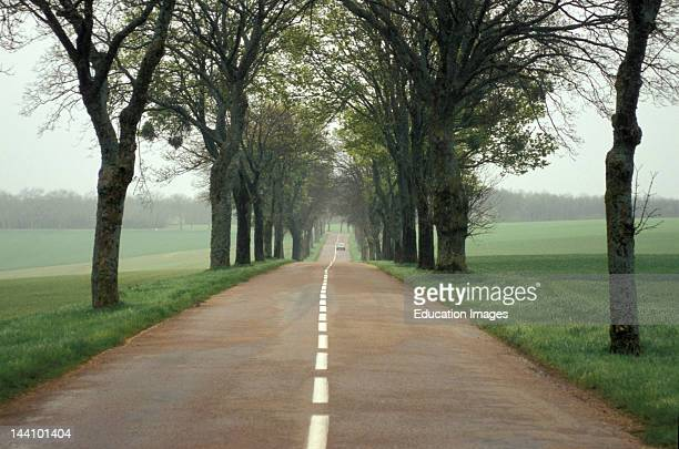 France LucenayLeDuc Tree Lined Country Road Along The D19