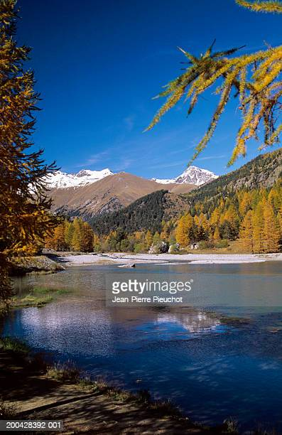 France, Mercantour, Casterino Lake, larch trees in foreground, autumn