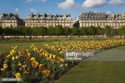 France, Paris, Rue de Rivoli, tulips in the Tuileries Garden
