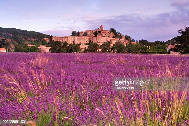 France, Provence, Banon village, view across lavender field