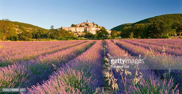 France, Provence, lavender field, Banon village in distance