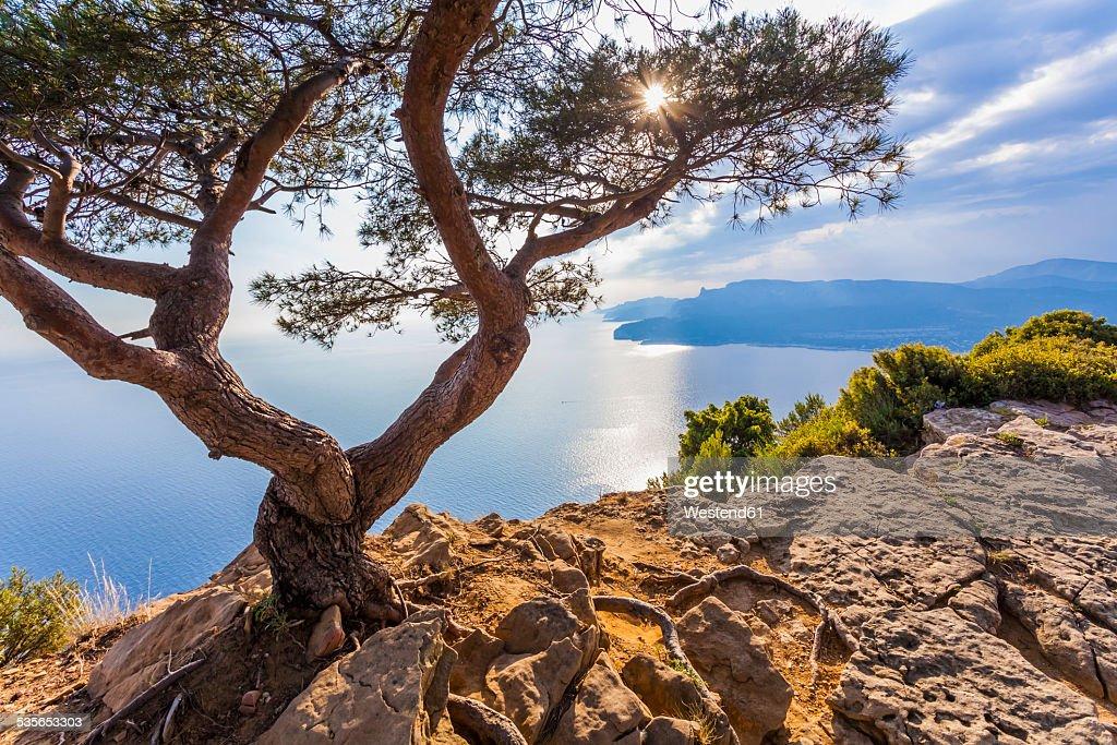 France, Provence-Alpes-Cote dAzur, Bouches-du-Rhone, Mediterranean coast, near La Ciotat and Cassis, Corniche des Cretes, Tree against the sun