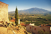 France, Pyrenees, Roussillon, vineyard by Eus village