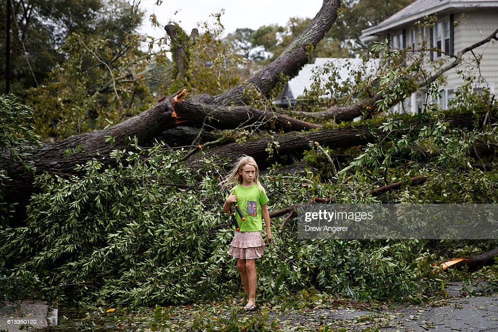 Frances Long examines an elm tree that fell in front of her family's home October 8 2016 in Savannah Georgia Across the Southeast Over 14 million...