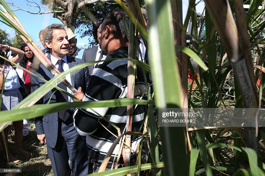 France's right-wing Les Republicains (LR) party president Nicolas Sarkozy visits a sugar cane field with local farmers to speak in favour of an adaptation of european regulations for La Reunion island to preserve the sugar cane industry in Saint Andre, on May 27, 2016. / AFP / RICHARD