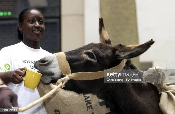 Francesca Arhin from Oxfam in Croydon prepairs to lead a procession of donkeys laden with sacks of coffee beans past the Stock Exchange in London as...