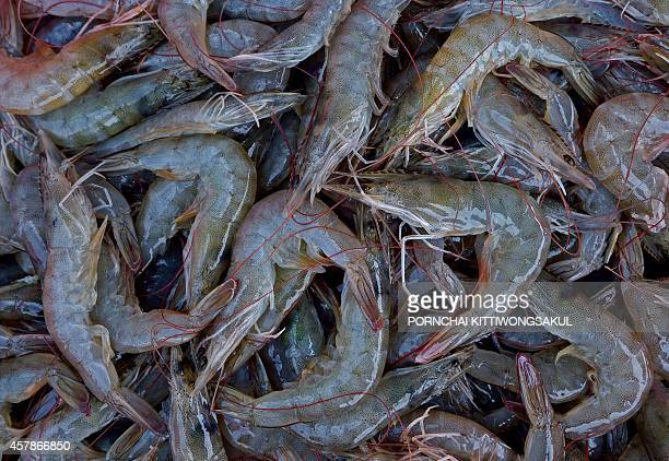 FranceThailandfishingfoodrightsworkFOCUS by Emmanuelle Michel with Delphine Thouvenot Prawns are displayed at a market in Samut Sakhon province a...
