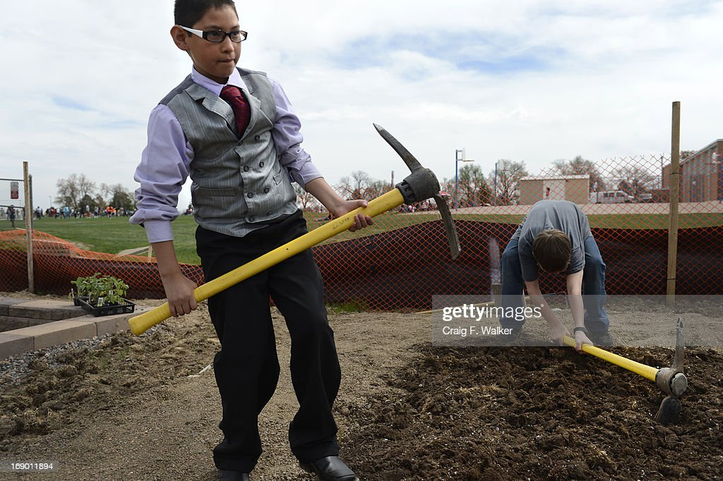 Francisco Rios, 12, works in a student plot during the North Middle School Garden Festival in Aurora, CO May 18, 2013. Francisco also read a poem during the opening ceremony. The celebration marked the opening of the first school-based community garden in Aurora Public Schools. The project, funded by The Piton Foundation, was made possible through a partnership of Aurora Public Schools, Denver Urban Gardens (DUG), and Anschutz Medical Campus Department of Family Medicine and BRANCH, a multi-disciplinary student organization from the medical campus. A second garden is scheduled to open later this year at Hinkley High School.
