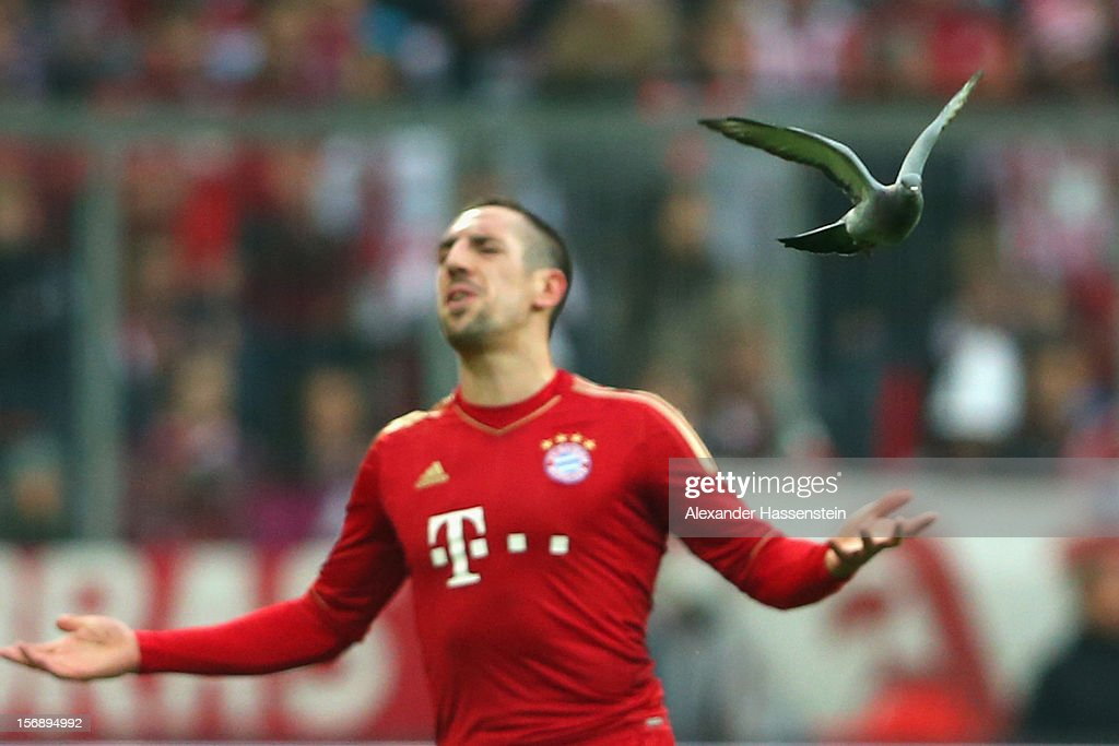 Franck Ribery of Muenchen reacts whilst a dove flys during the Bundesliga match between FC Bayern Muenchen and Hannover 96 at Allianz Arena on November 24, 2012 in Munich, Germany.