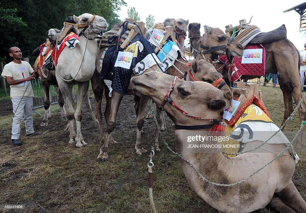 Franco-Moroccan Glif Nanir stands next to camels before the start of the French Cup of camel races on August 10, 2014 on the horserace track of La Chartre-sur-le-Loir, western France. Unusual in these latitudes, eight dromaderies that have never seen the desert, took part in two races of 1000 meters.