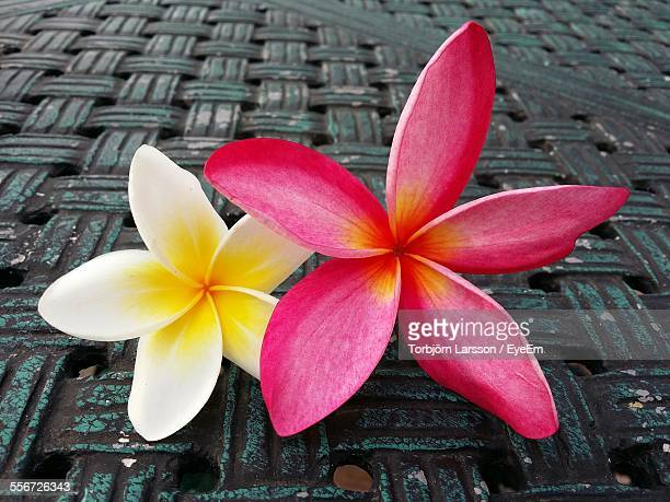 Frangipani Flowers On Table