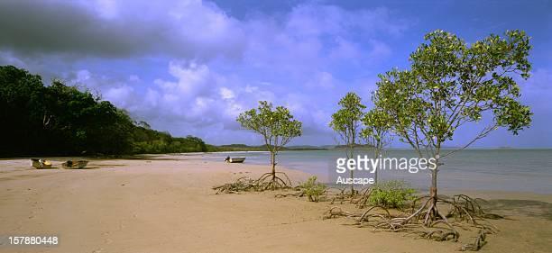 Franjipani Beachwith mangrovesCape York Queensland Australia